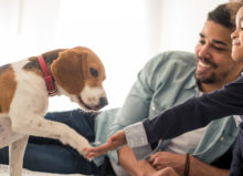 How Does a Pet Trust Work in Florida | Lindsay Allen Law - Naples Attorneys at Law